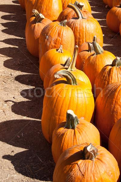 カボチャ 表示 ファーム オレンジ 野菜 野菜 ストックフォト © LynneAlbright