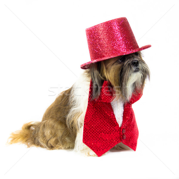 Dog in a Red Outfit Stock photo © LynneAlbright
