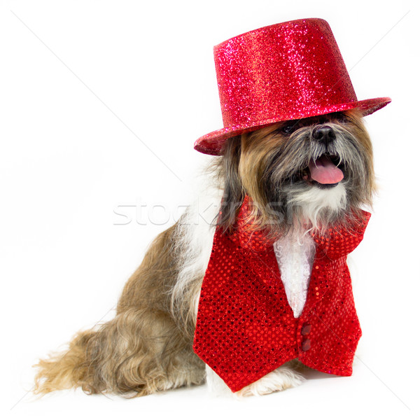 Dog in a Red Party Costume Stock photo © LynneAlbright