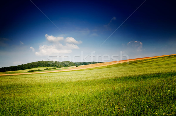 Fine summer landscape. Stock photo © lypnyk2