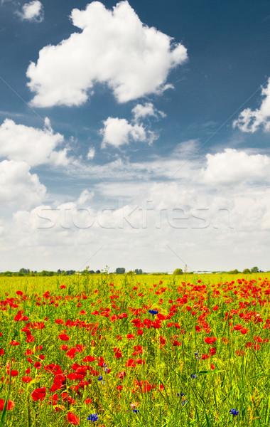 Splendid summer landscape of meadow. Stock photo © lypnyk2