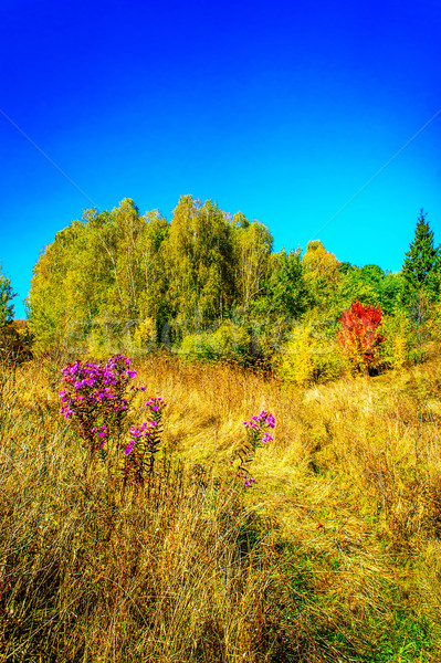 Delicious, fabulous fall over meadow. Stock photo © lypnyk2
