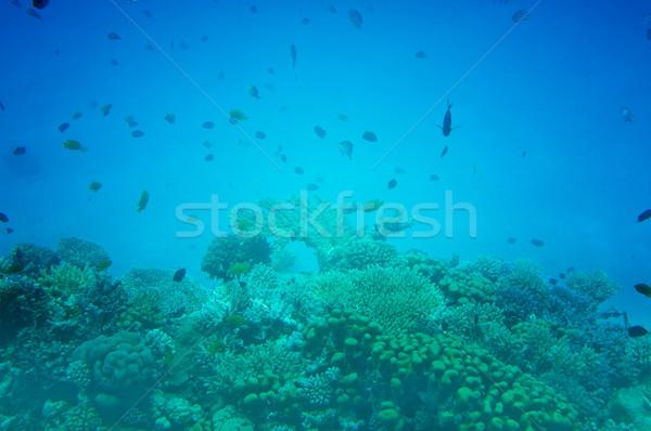 Astonishing undersea world of Red Sea. Stock photo © lypnyk2