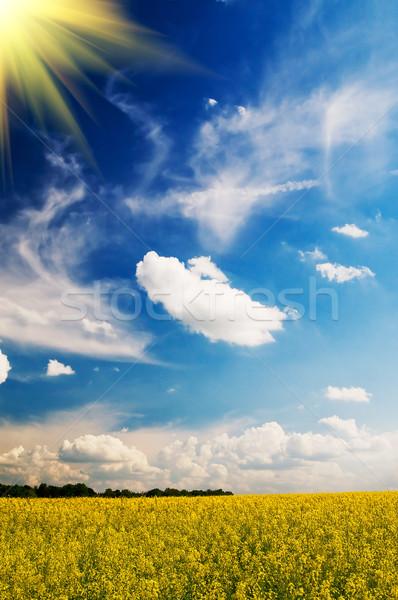 Stock fotó: Higgadtság · mező · búza · nap · kora · reggel · tavasz