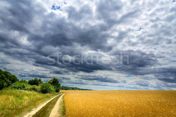 Beginning a summer thunderstorm. Stock photo © lypnyk2