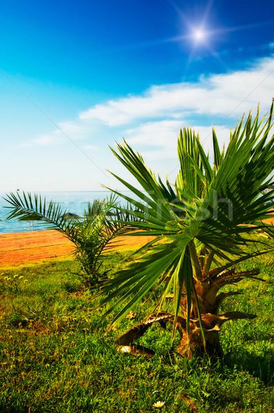 Foto stock: Maravilhoso · nuvens · acima · praia · tropical · pequeno · palms