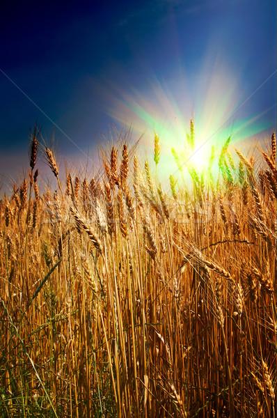 Summer landscape and splendid sunset. Stock photo © lypnyk2