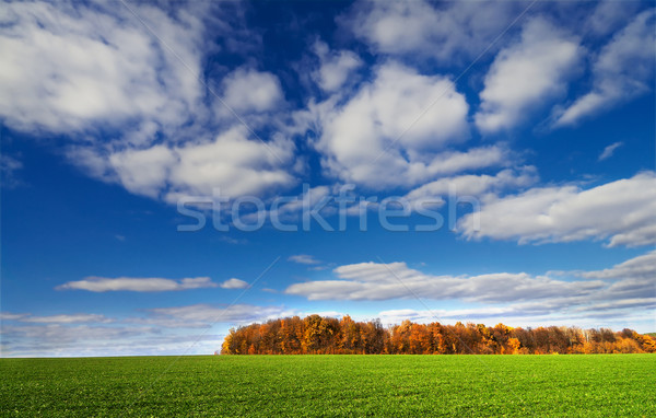 Countryside by  later autumn. Stock photo © lypnyk2