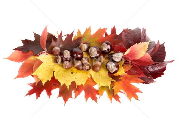 Autumn still life. Stock photo © lypnyk2