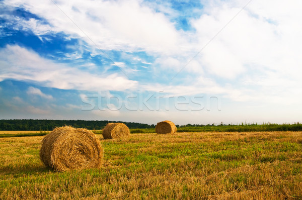 Haystacks and stubble by summertime. Stock photo © lypnyk2
