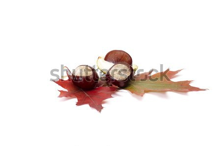 Colorful autumn leaves and chestnuts. Stock photo © lypnyk2
