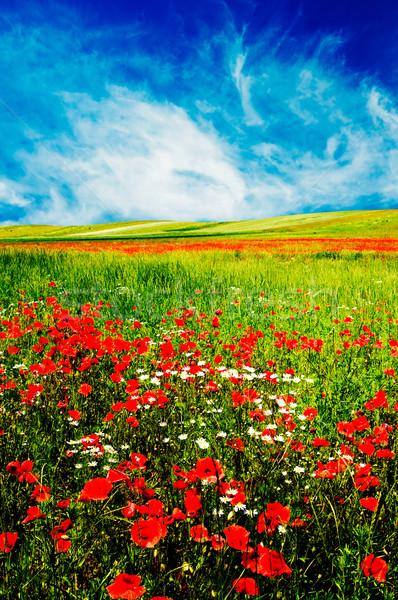 Csodálatos legelő nyár gyönyörű mező kora reggel Stock fotó © lypnyk2