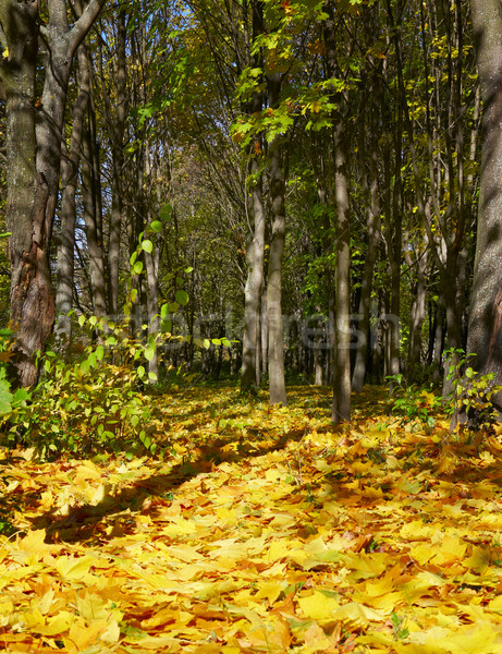 Wonderful autumnal grove Stock photo © lypnyk2