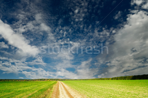 Rural road crosses an autumnal field with green wheat. Stock photo © lypnyk2