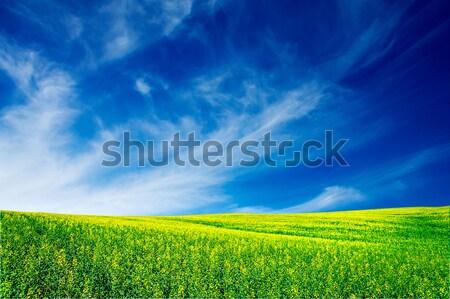Wonderful rapefield and cloudscape. Stock photo © lypnyk2