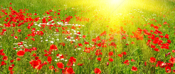 Colorful meadow early summer morning. Stock photo © lypnyk2