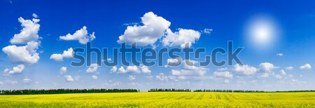 Fine panorama of rapefield and cloudscape. Stock photo © lypnyk2