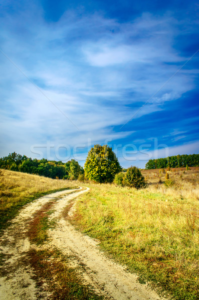 Autumnal view of wonderful field, trees and blue sky. Stock photo © lypnyk2