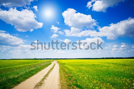 Countryside road and golden field of rapeseeds. Stock photo © lypnyk2