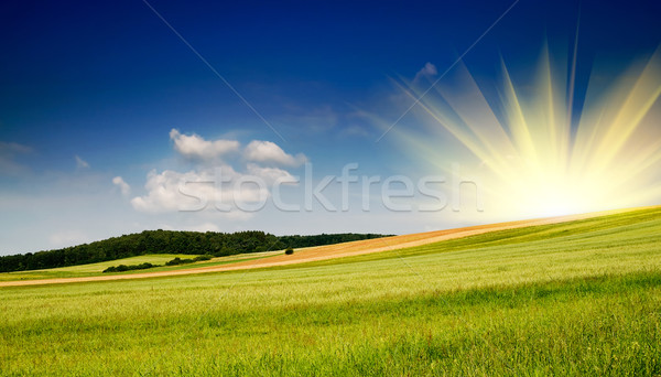 Stock fotó: Nyár · tájkép · derűs · legelő · csodálatos · kék · ég