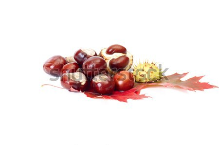 Nice autumn leaves and chestnuts on a white. Stock photo © lypnyk2