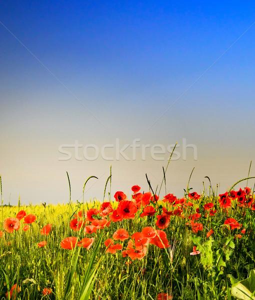 Meraviglioso prato estate verde campo completo Foto d'archivio © lypnyk2