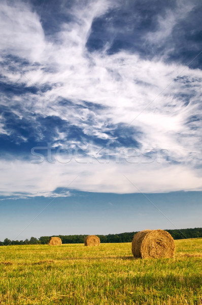 Haystack and stubble by summertime. Stock photo © lypnyk2