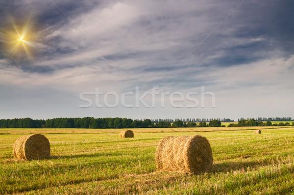 Szénaboglya borosta nyáridő mező tele gyengéd Stock fotó © lypnyk2
