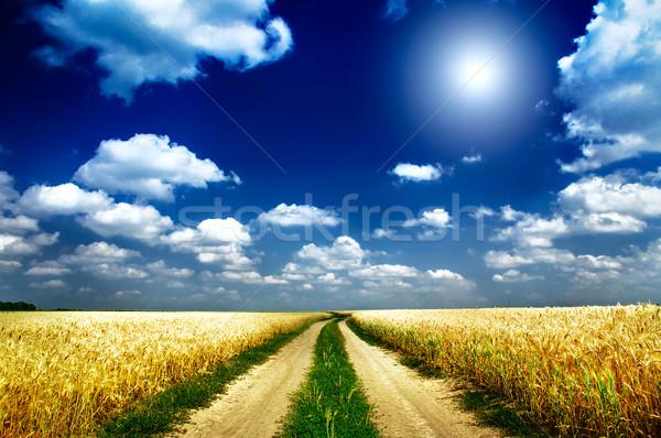 Fun sun and field full of wheat. Stock photo © lypnyk2