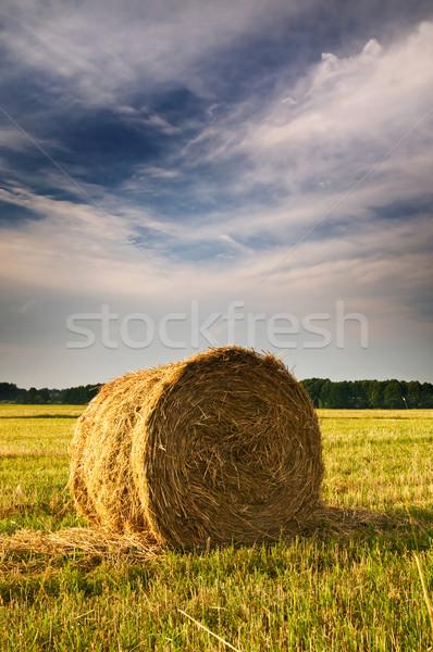 красивой стерня области сено лет Сток-фото © lypnyk2