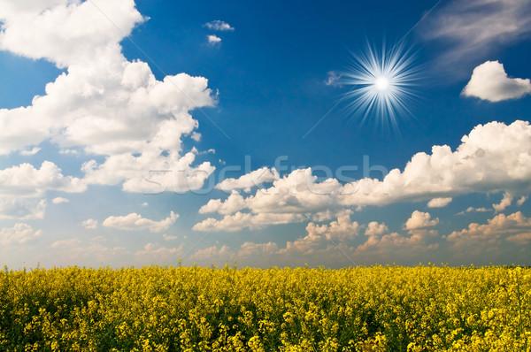 Stock fotó: Arany · mező · csodálatos · elképesztő · felhők · égbolt