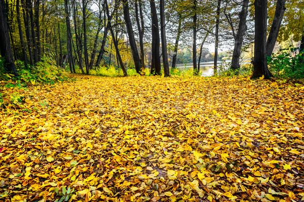 Separazione autunno meraviglioso lago Foto d'archivio © lypnyk2
