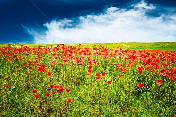 Beautiful meadow by summer. Stock photo © lypnyk2
