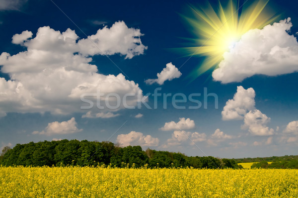 Charm rapefield and cloudscape with sunbeams by springtime. Stock photo © lypnyk2