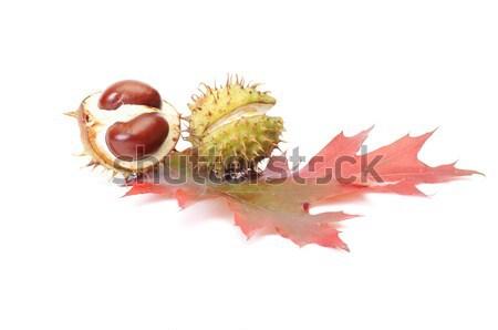 Splendid chestnuts and leaf on a white. Stock photo © lypnyk2
