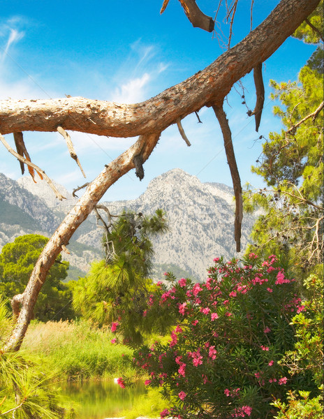 Wonderful landscape of mountains and flowers. Stock photo © lypnyk2