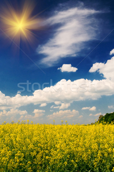 Serenity field of  wheat and  sun early morning by springtime. Stock photo © lypnyk2