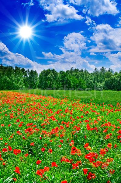 Fun sun hight in the sky above green meadow. Stock photo © lypnyk2