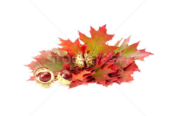 Csodálatos őszi levelek fehér izolált erdő levelek Stock fotó © lypnyk2