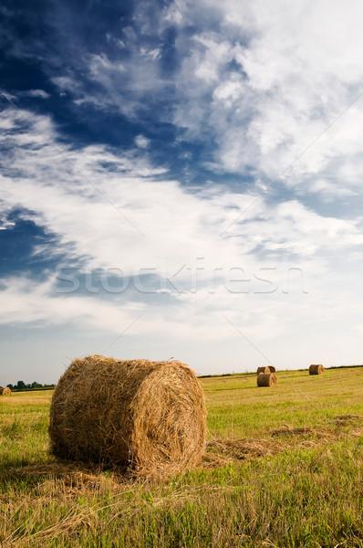 Alan şaşırtıcı mavi gökyüzü beyaz bulutlar kuru ot yığını Stok fotoğraf © lypnyk2