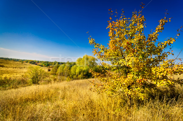 Colorful autumn motif. Stock photo © lypnyk2