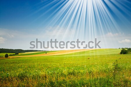 Splendid  spring field. Stock photo © lypnyk2