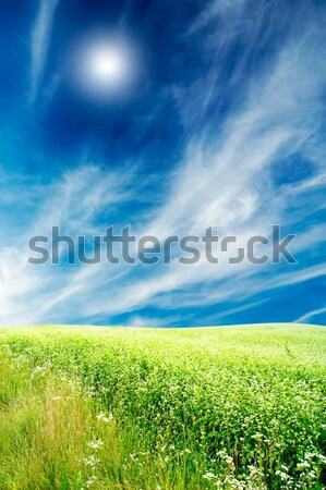 Field full of buckwheat and cloudscape with sunbeams. Stock photo © lypnyk2