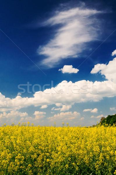 Serenity field of  wheat and  sun early morning . Stock photo © lypnyk2