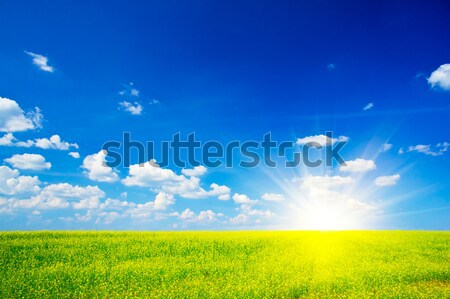 Finest rapefield and cloudscape. Stock photo © lypnyk2
