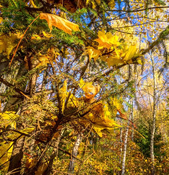Autumn in the forest. Stock photo © lypnyk2