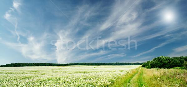 The wonderful field of buckwheat before the rain.  Stock photo © lypnyk2