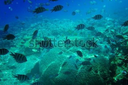 Underwater landscape of Red Sea. Stock photo © lypnyk2