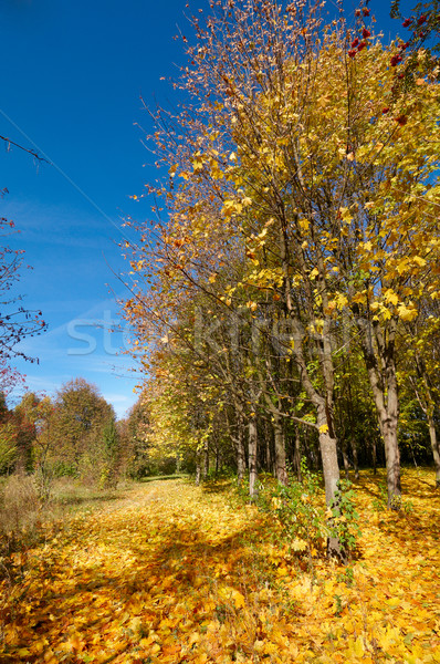 Wonderful autumn grove. Stock photo © lypnyk2
