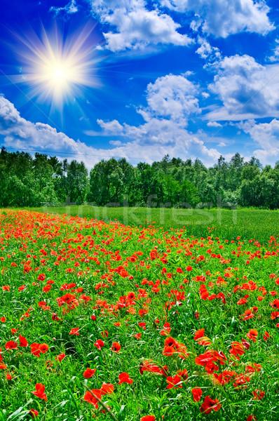 Beautiful,amazing landscape by summer. Stock photo © lypnyk2